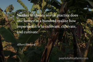 Neither in theory nor in practice does one farmer in a hundred realize how important it is to cultivate, cultivate and cultivate