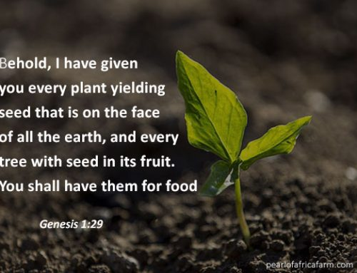 Behold, i have given you every plant yielding seed that is no the face of all the earth