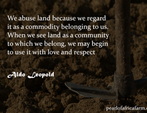 Aldo Leopold: We abuse land because we regard it as a commodity belonging to us