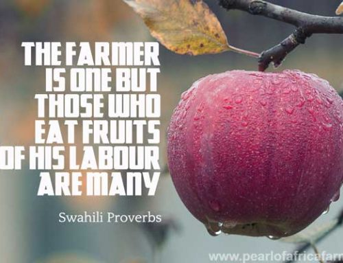 The farmer is one but those who eat fruits of his labour are many