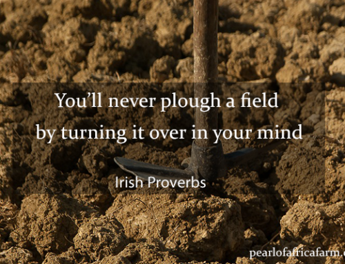 You'll never plough a field by turning it over in your mind