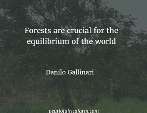 Forests are crucial for the equilibrium of the world