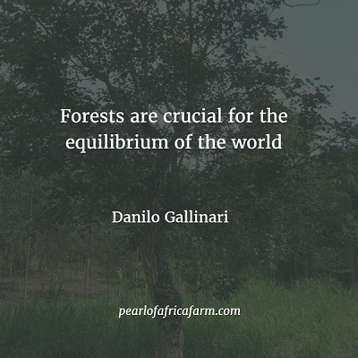 forests-are-crucial-for-the-equilibrium-of-the-world